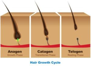 What is your eyelash growth cycle?